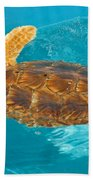 Loggerhead Sea Turtle Beach Towel
