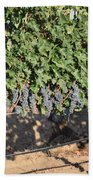 Lorimar Grapes Beach Towel