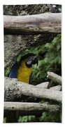 2 Macaws Framed By Tree Branches Inside The Jurong Bird Park Beach Towel