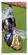 Malachite Butterfly Metamorphosis Beach Towel