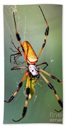 Male And Female Silk Spiders With Prey Beach Towel