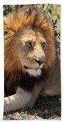 Male Lion On The Masai Mara  Beach Towel