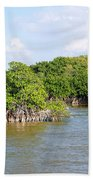 Mangrove Forest Beach Towel by Carol Ailles