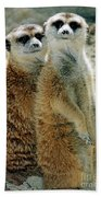 Meerkats Beach Towel