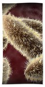 Microscopic View Of Paramecium Beach Towel by Stocktrek Images
