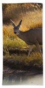 Mule Deer   #3950 Beach Towel