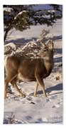 Mule Deer   #6339 Beach Towel
