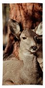Mule Deer Doe Beach Towel