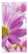 Mums Flowers Against White Background Beach Sheet