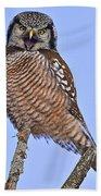 Northern Hawk Owl  Beach Towel