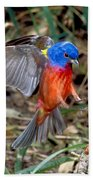 Painted Bunting Passerina Ciris Beach Towel