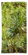 Pandanus Palm Tree Beach Towel
