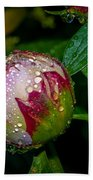 Peony With Rain Drops Beach Towel