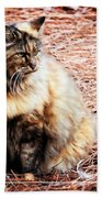Pine Needle Kitty Beach Towel