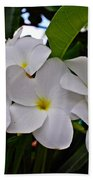 Plumeria Flowers Beach Towel