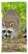 Raccoons Beach Towel