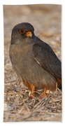 Red Footed Falcon Falco Vespertinus Beach Towel