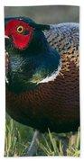 Ring-necked Pheasant Beach Towel
