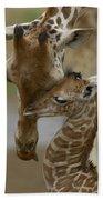 Rothschild Giraffe And Calf Beach Sheet