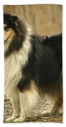 Rough Collie Dog Beach Towel