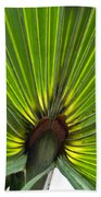 Saw Palmetto  Beach Towel