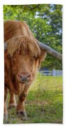 Scottish Highlander Ox Beach Towel