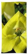Snapdragon From The Mme Butterfly Mix Beach Towel