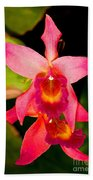 Sophronitis Orchid Beach Towel