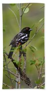 Spotted Towhee Beach Towel