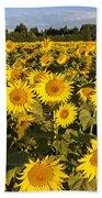 Sunflowers At Dawn Beach Towel