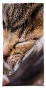 Sweet Small Kitten  Beach Towel
