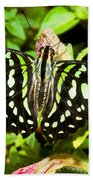 Tailed Jay Butterfly Beach Towel