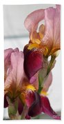 Tall Bearded Iris Named Indian Chief Beach Towel