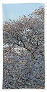The Simple Elegance Of Cherry Blossom Trees Beach Towel