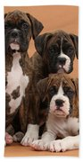 Three Boxer Puppies Beach Towel