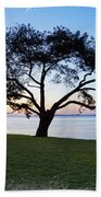 Tree By The Bay Beach Towel