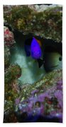 Tropical Fish In Cave Beach Towel