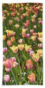 Tulips At Dallas Arboretum V92 Beach Towel