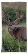 Two In The Bush Beach Towel by Jim Garrison
