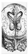Vesalius: Brain, 1543 Beach Towel