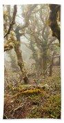 Virgin Mountain Rainforest Of Marlborough Nz Beach Towel