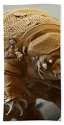 Water Bear Beach Towel