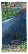 Western Lowland Gorilla Beach Towel