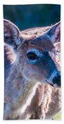 White Tail Deer Bambi In The Wild Beach Sheet