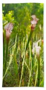 White-topped Pitcher Plant Beach Towel