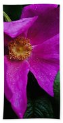Withered Rose Beach Towel