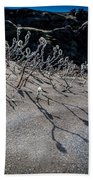 Woolly Willow Growing Wild In The Black Beach Towel