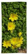 Yellow Ice Plant In Bloom Beach Towel