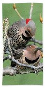 Yellow-shafted Northern Flickers Beach Towel