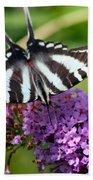 Zebra Swallowtail Butterfly At Butterfly Bush Beach Towel